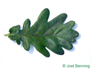 The curvate leaf of farnia